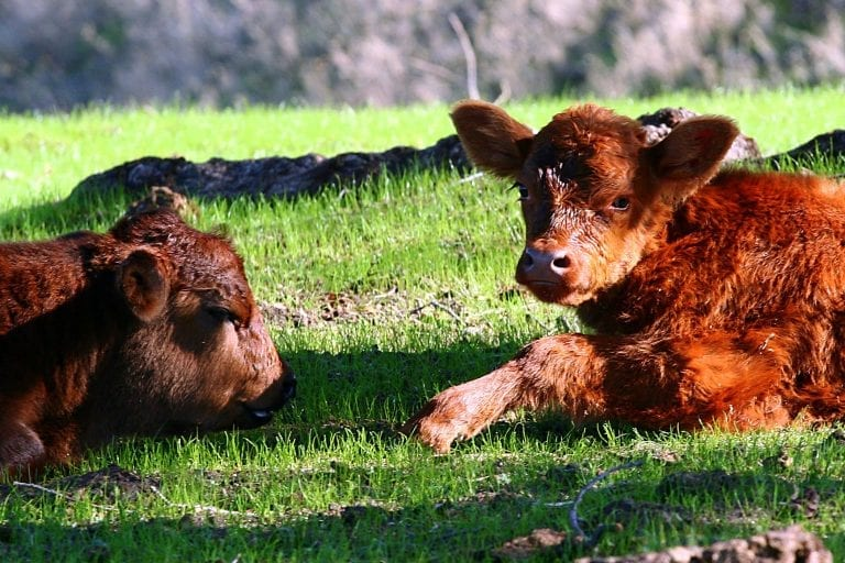 10 Horrific Halloween Horror Stories Cows Would Tell Each Other About Humans