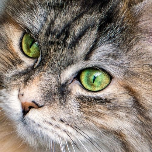 RSPCA says vegan cat owners should face jail time