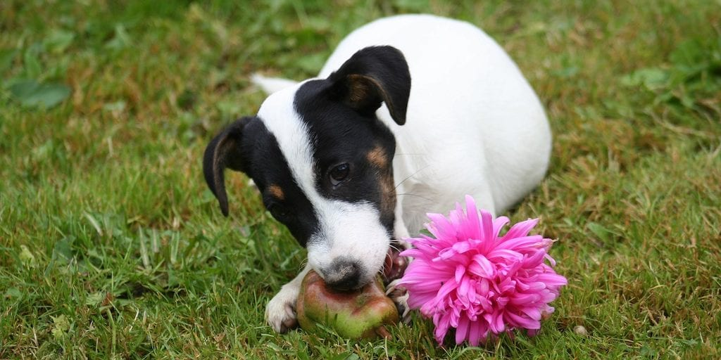 Is a vegan diet healthy for dogs- Will they just survive, or can they thrive