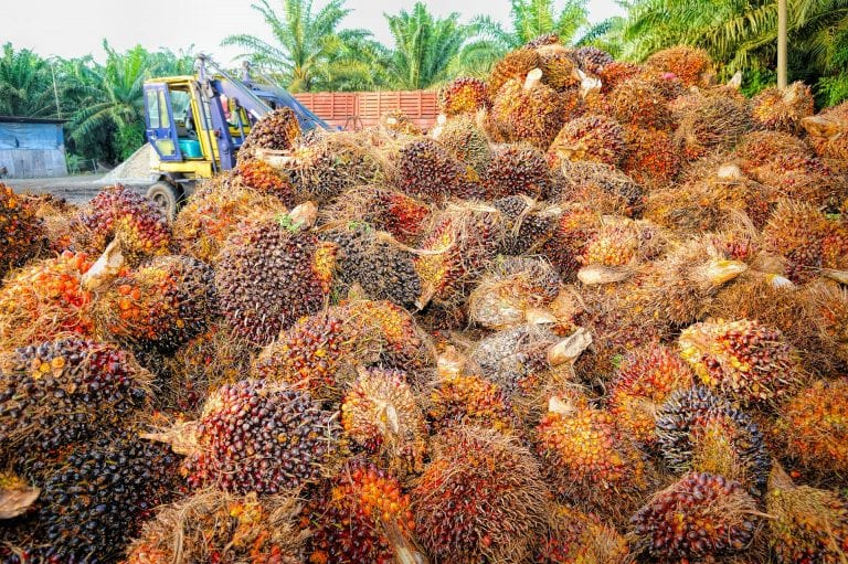 Is palm oil vegan- Everything you need to know about palm oil