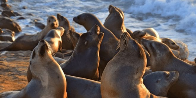 Petition: Activists Fight US Bill Which Allows 1000 Sea Lions To Be Slaughtered Each Year