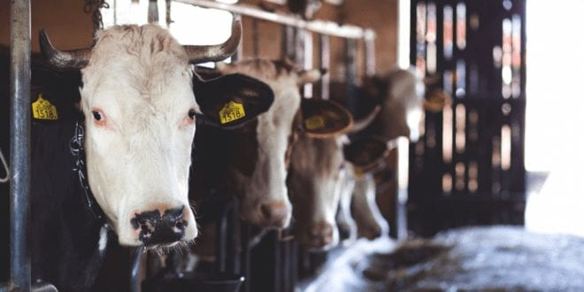 2,700 dairy farms went bust in the US