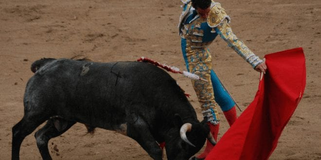 Spanish bullfighting is in rapid decline