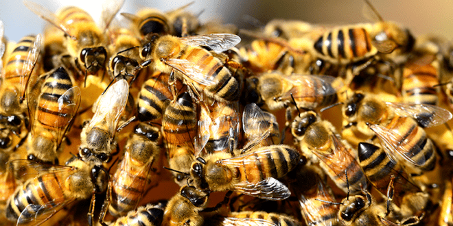 Half a Billion Bees Have Died in Brazil