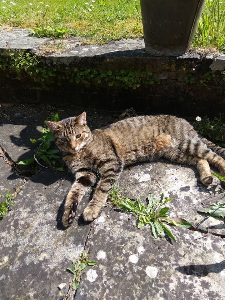 cat laying on floor depicting cat death toll in Brighton