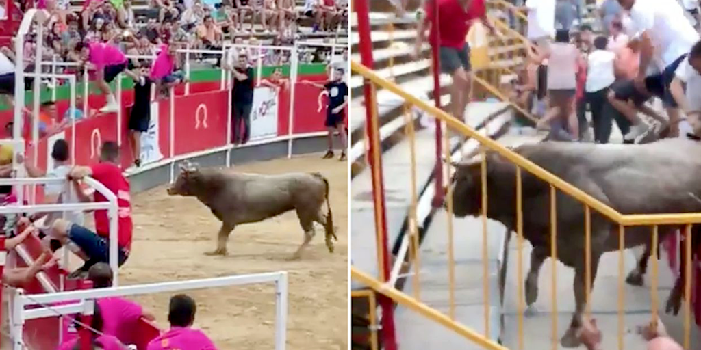 Bull shot dead after escaping bullfighting ring and rampaging through crowd