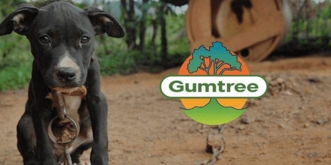 Pets given away for free on Gumtree end up abused, killed and in dog fighting rings