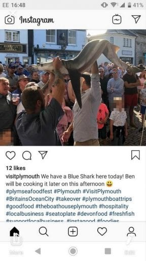 Screenshot_Outrage as endangered blue shark paraded around UK food festival and eaten