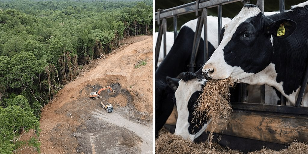 Burger King guilty of massive deforestation across Latin America