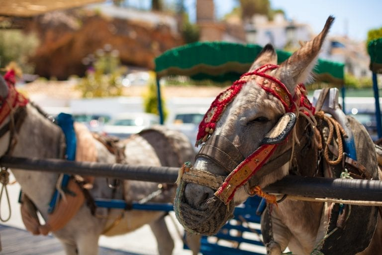 Donkey rides banned in Costa Rica, but only if you're over 12.5 stone