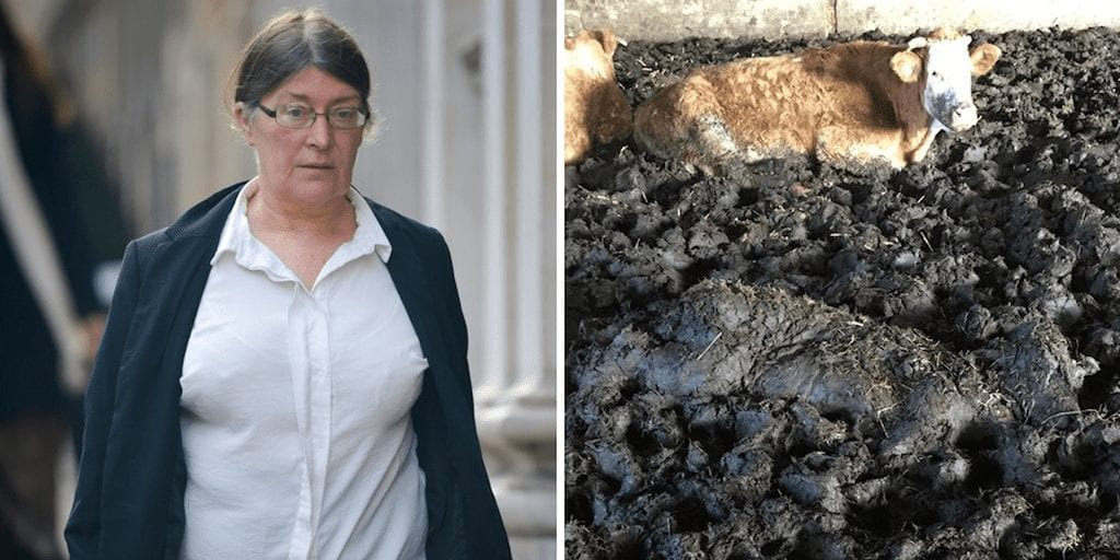 Farmer jailed for 18 months after leaving animals to rot in appalling conditions