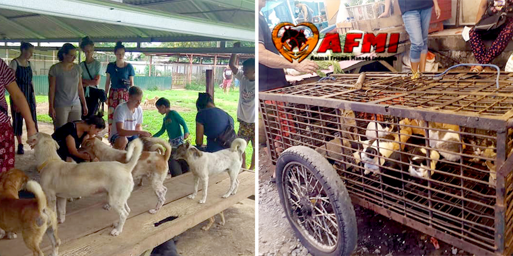 This Indonesian man keeps rescuing dogs from the meat trade despite facing abuse and attacks