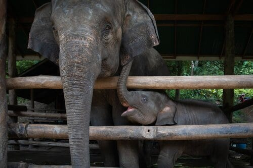 So-called elephant 'sanctuary' blasted for abusing animals with bullhooks to force them to perform