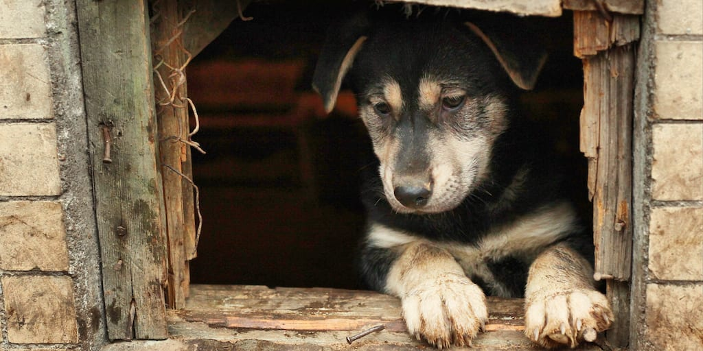 American city implements new programs to help street dogs