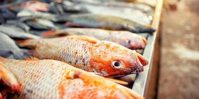 Fish Free February challenges people to ditch seafood to protect the oceans