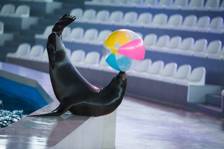 Hong Kong theme park ends shocking dolphin and sea lion shows