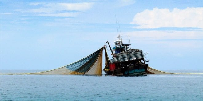 Sussex becomes the first UK council to ban trawler fishing for the climate