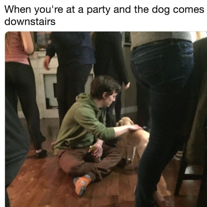 When you're at a party and the dog comes downstairs