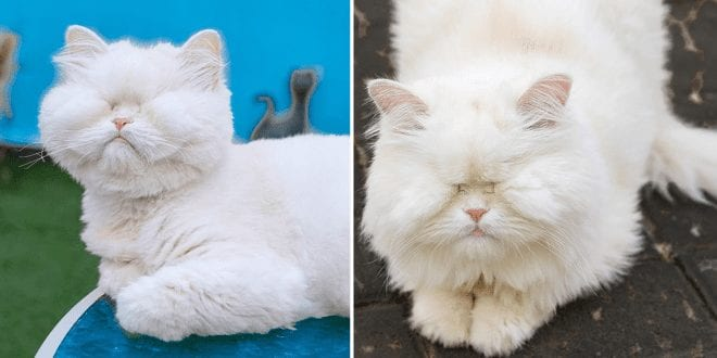 A cat who went blind from neglect is now raising money for animal rescue