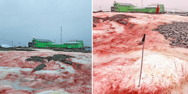 Antarctica is splattered with blood-red snow, images reveal