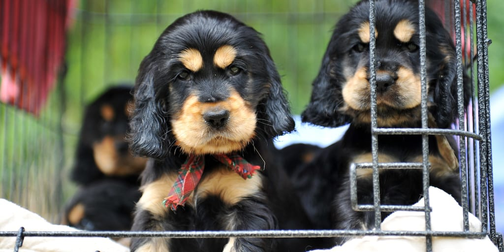 Bill to ban puppy mills fails over fears for pet store owners
