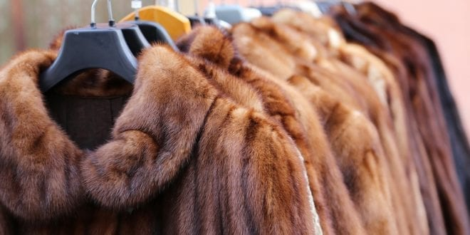 Calvin Klein and 16 other brands ban fur because the future of fashion is vegan