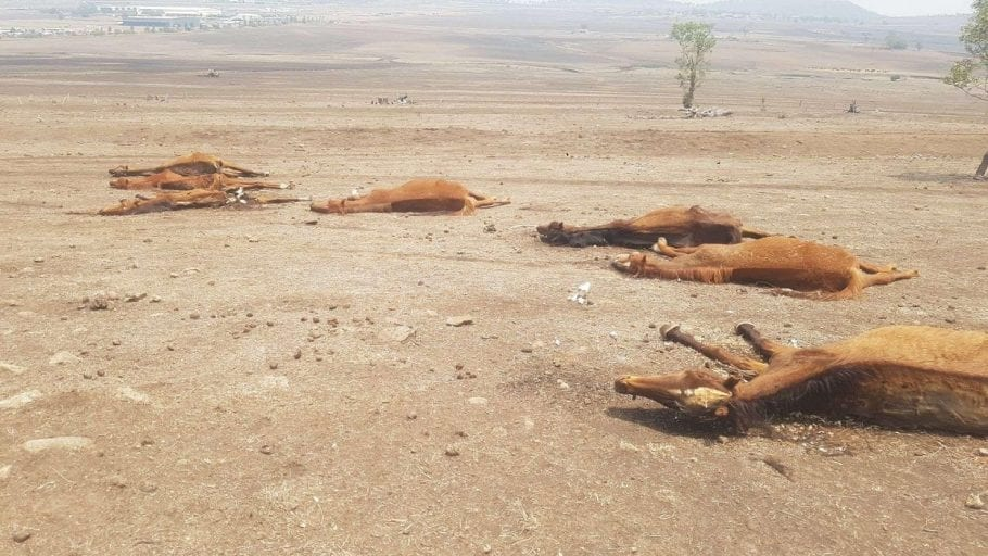 Outrage as 8 starving horses found amid 27 'slowly decomposing' corpses at farm
