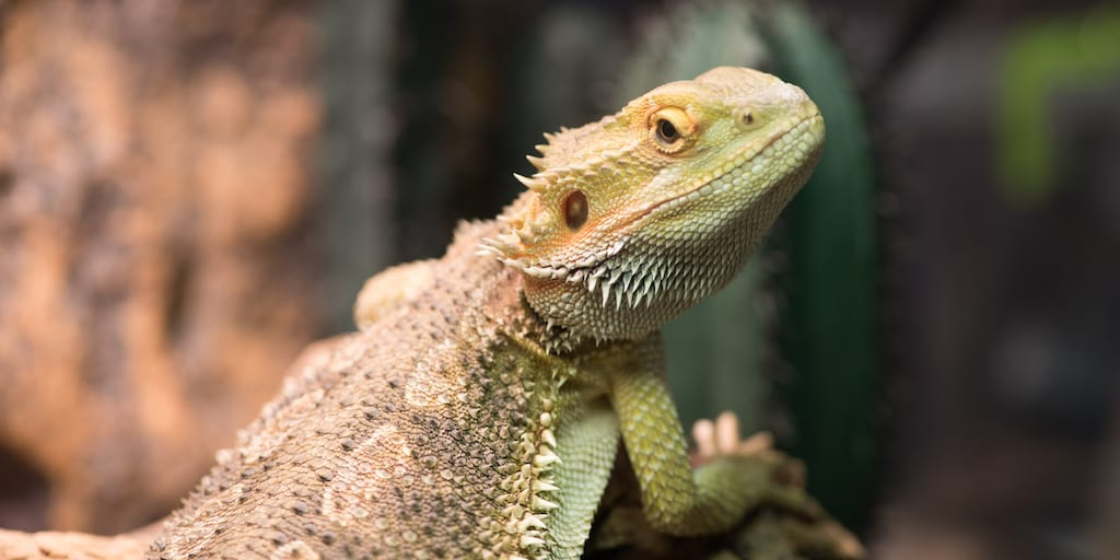 Throwaway pets Thousands of exotic animals were rescued in the UK last year after being discarded by owners