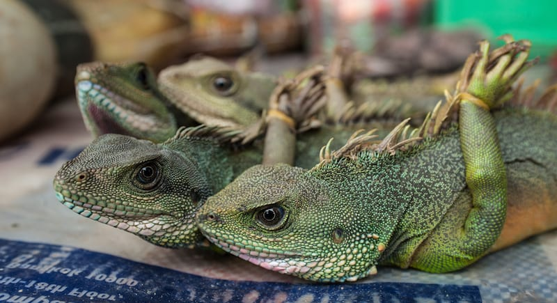 China finally implements a permanent ban on wildlife meat stop virus spread