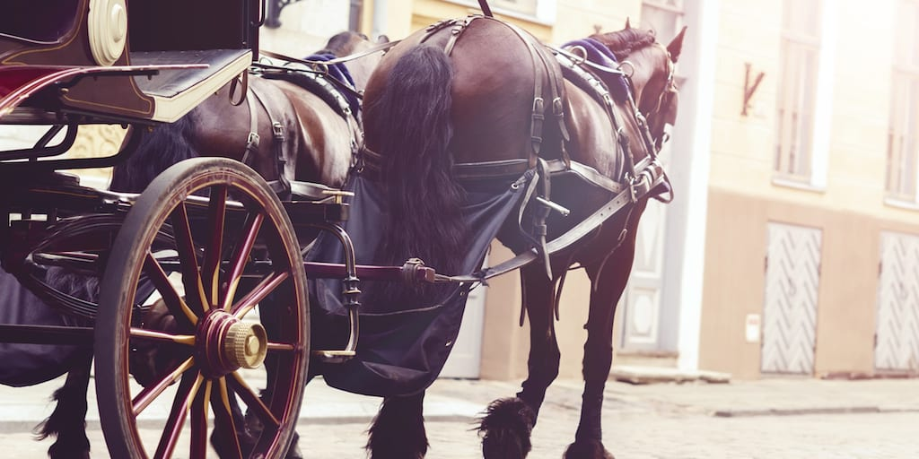 Heartbreaking video captures a stumbling Central Park carriage horse collapsing on the street