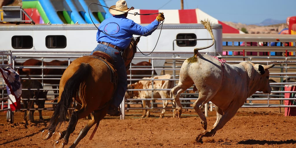 Organisers refuse to close rodeo despite spike in bull death