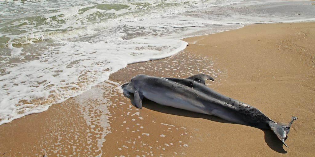 Reward offer after two dead dolphins found with 'bullet hole' wounds in Florida
