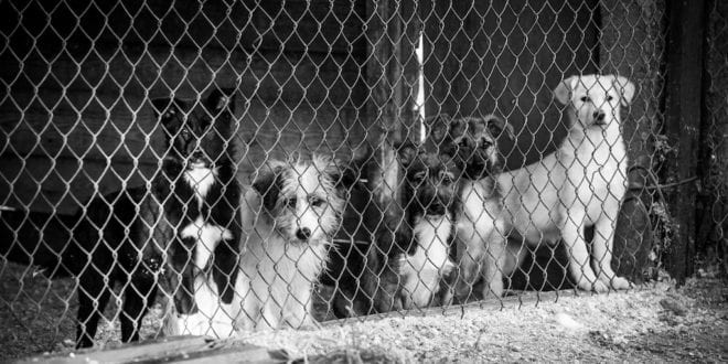 Activists rescue 423 stolen dogs from illegal Chinese slaughterhouse