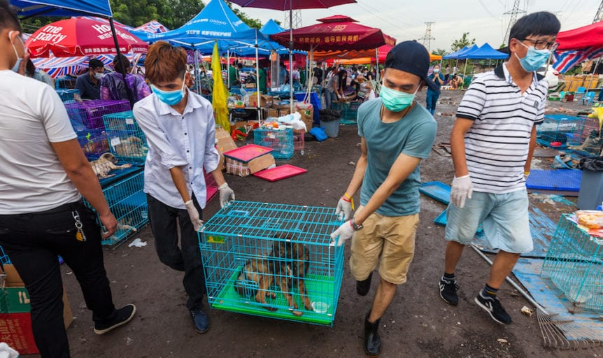 Activists rescue 423 stolen dogs illegal Chinese slaughterhouse