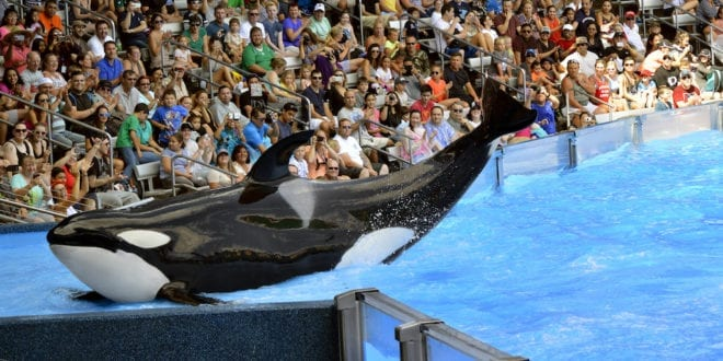 SeaWorld offered $250,000 end its cruelty on marine animals