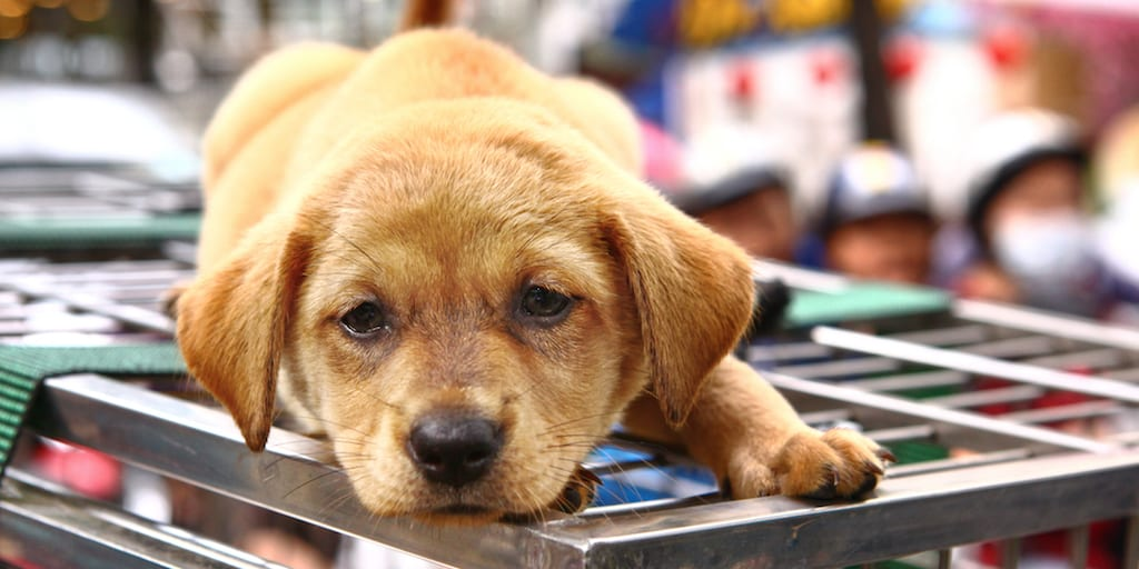 Second city in China bans eating dogs, cats, and wild animals following coronavirus outbreak
