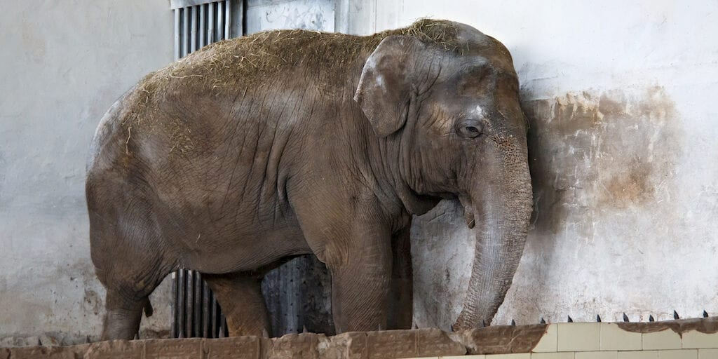 Cher helps rescue lonely elephant chained for 26 years Pakistan zoo