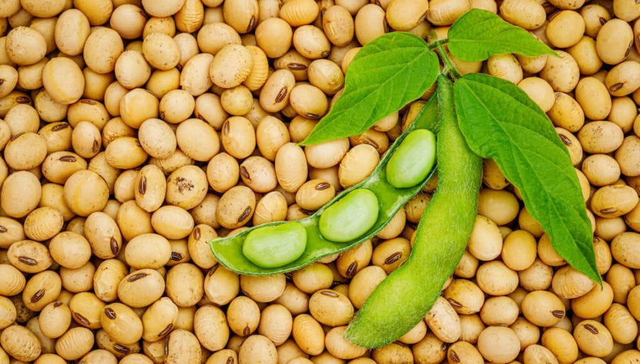 why you should add soya in your healthy diet