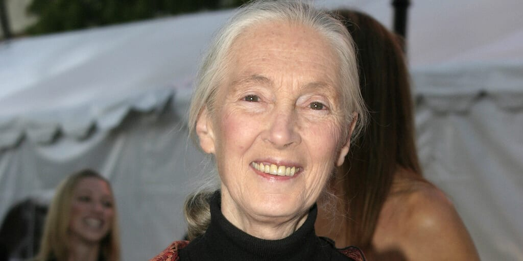 Jane Goodall warns humanity is finished
