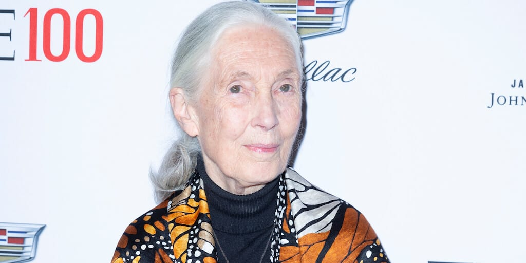 Jane Goodall warns 'humanity is finished'