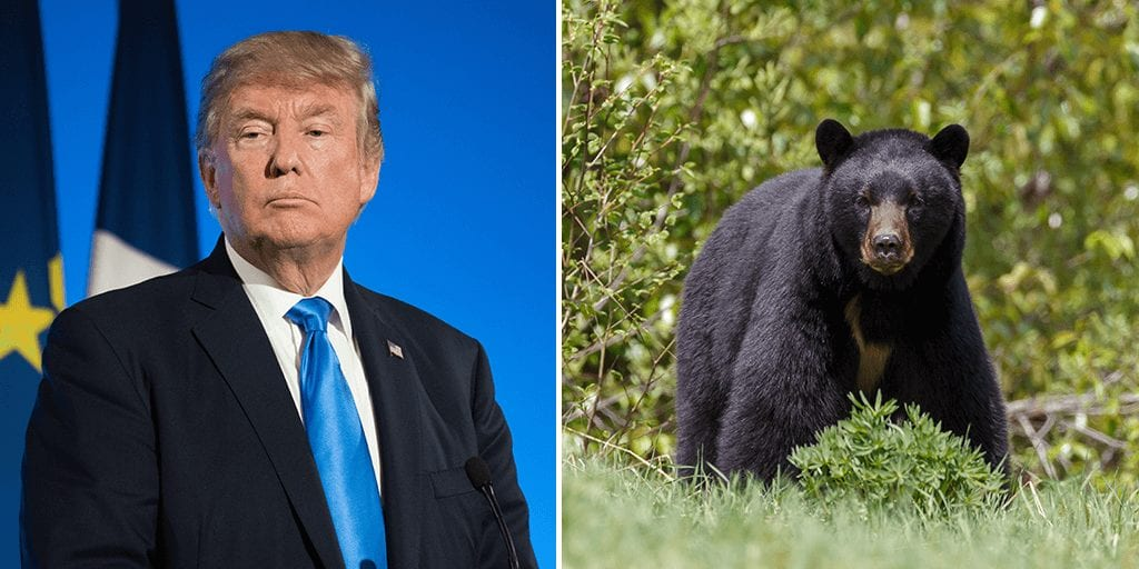 Trump administration lifts ban to allow killing bears, wolves and their cubs in Alaska