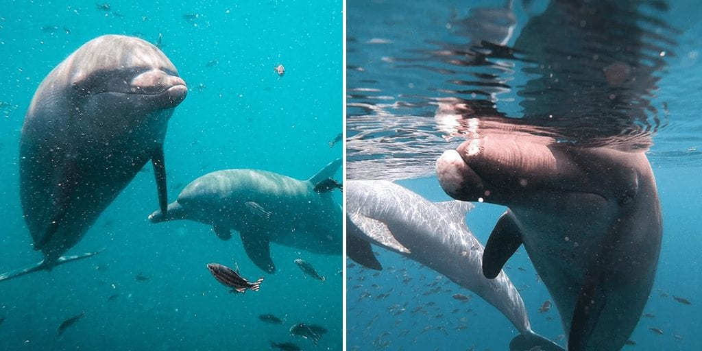 Bali opens world's first centre to aid captive dolphins return to the wild