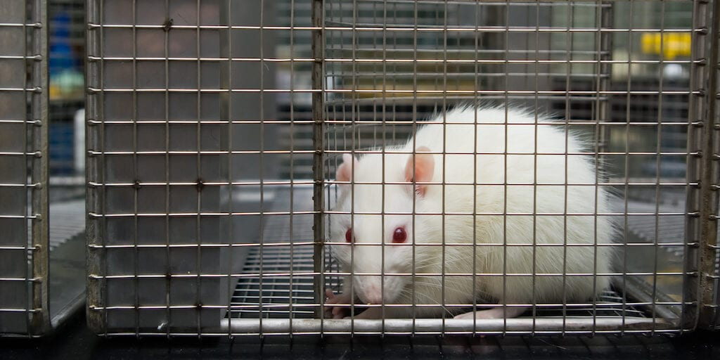 China plans to end cruel pre-market animal testing for imported 'ordinary' cosmetics 2021