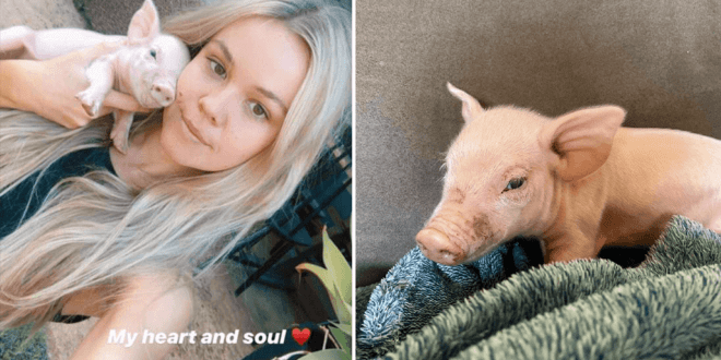 Vegan model activist to plead guilty for allegedly stealing pigs in animal rights protest