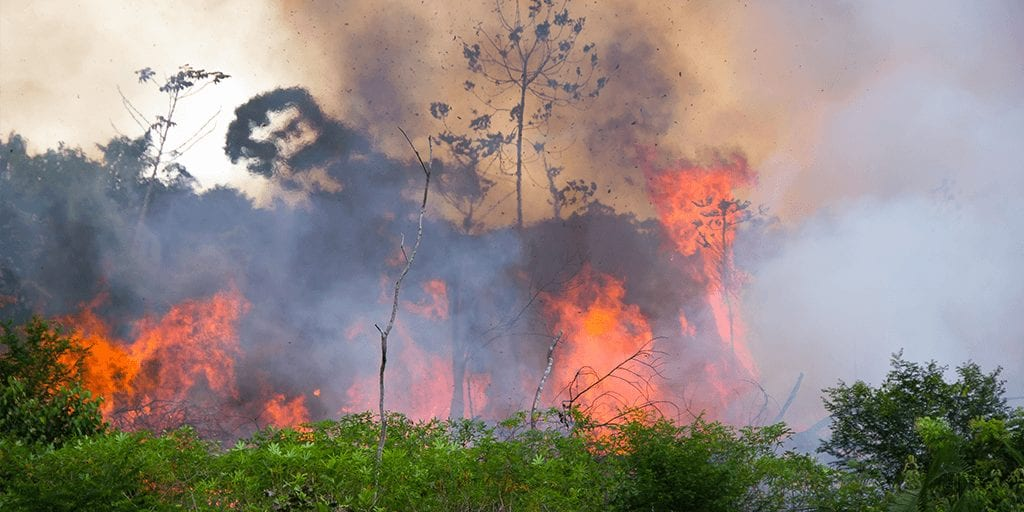 Brazil's Amazon is up in flames again with more than 29,307 fires recorded in August