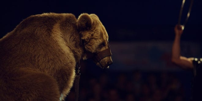 France to end mink breeding and wild animal captivity in circus