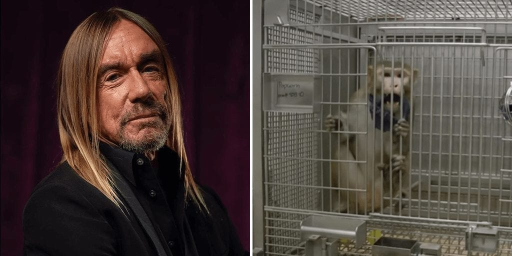 Punk Icon Iggy Pop gifts song _Free_ to help PETA speak up against cruel monkey experimentation