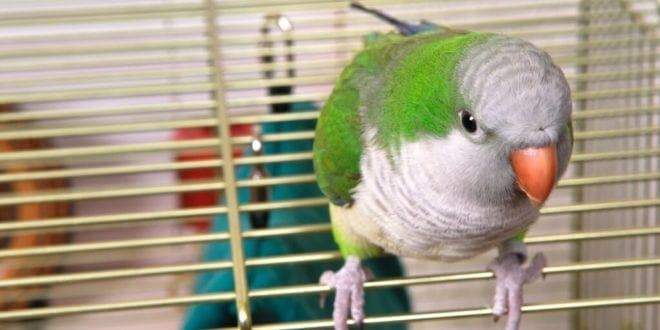 Irate man brutally smashes parakeet to death after pet store refuses refund