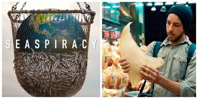 Seaspiracy filmmakers launch Crowdfunder to ramp up pressure on world leaders to make 30% oceans 'no take zones' by 2030.