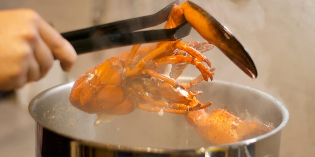 Boiling lobsters alive could be banned in new UK animal welfare bill